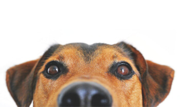image of dog looking up